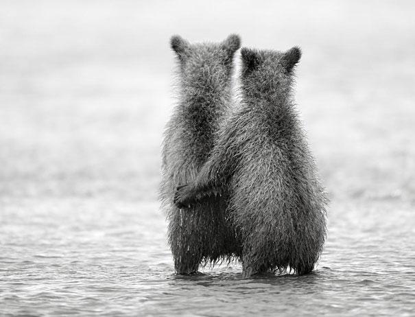cute-animais-gêmeos-14