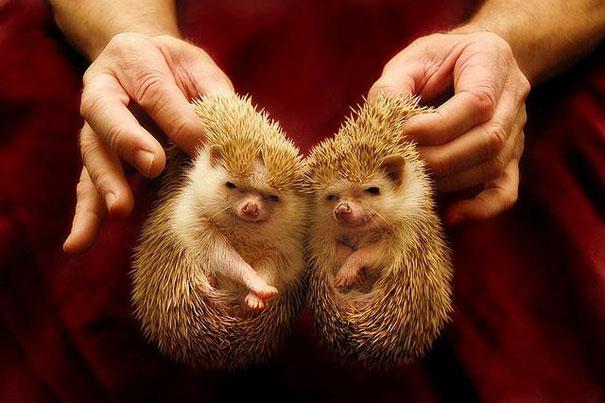 cute-animais-gêmeos-16
