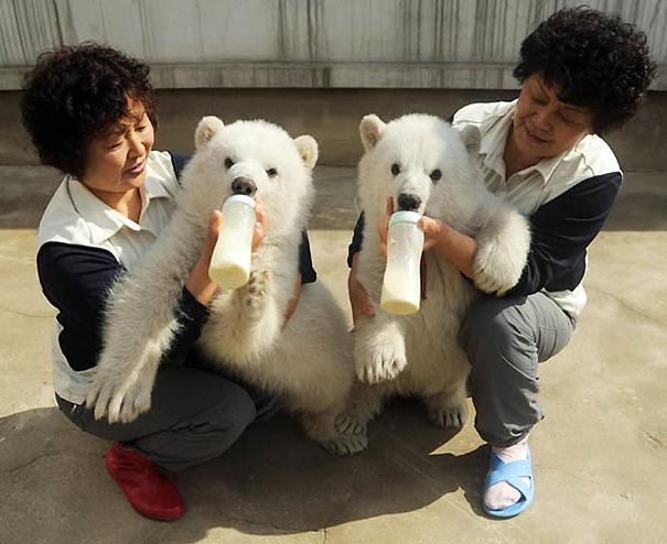cute-animais-gêmeos-17