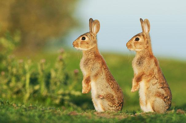 cute-animais-gêmeos-24