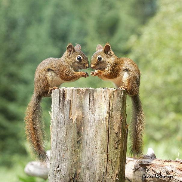 cute-animais-gêmeos-26