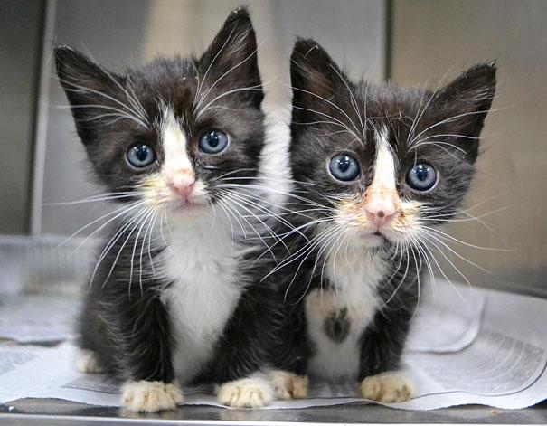 cute-animais-gêmeos-8