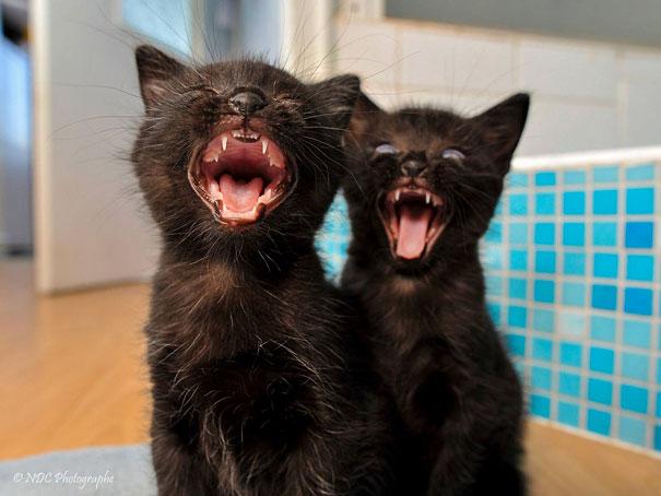 cute-animais-gêmeos-9