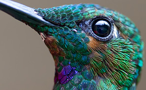 20 Vivid Hummingbird Close-ups Reveal Their Incredible Beauty