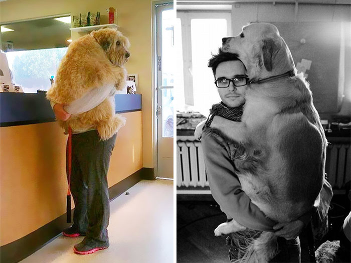 Post Pictures Of Dogs Hugging Their Humans