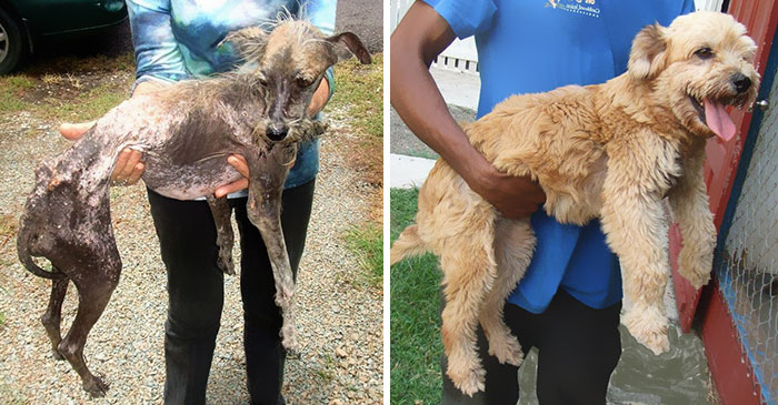 dog-makeover-before-after-rescue-19