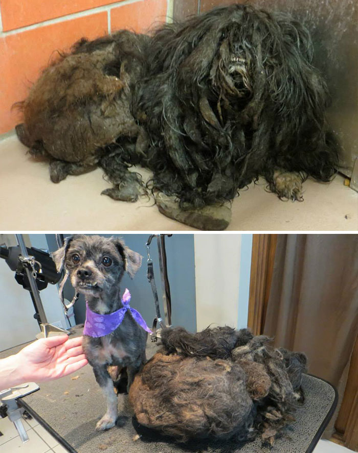 dog-makeover-before-after-rescue-33