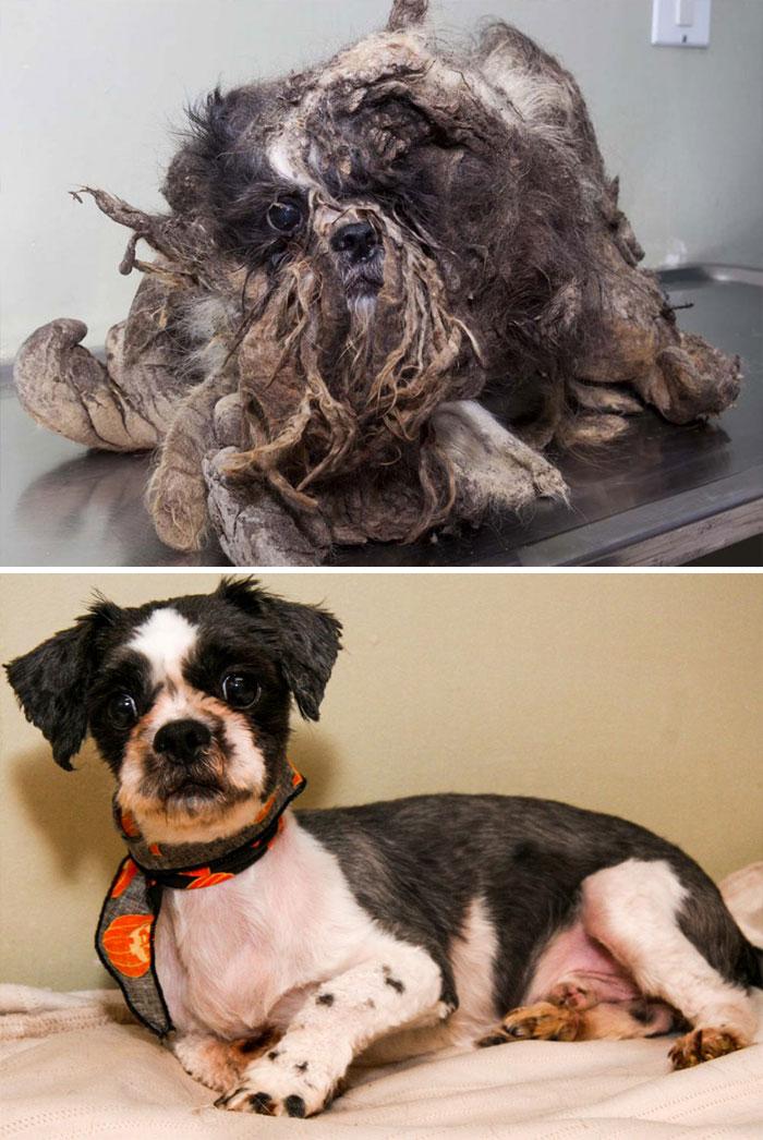 perro-makeover-antes y después-rescate-35
