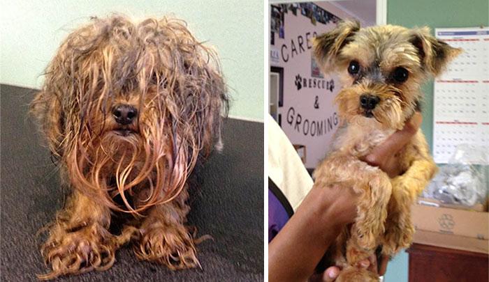 perro-makeover-antes y después-rescate-4