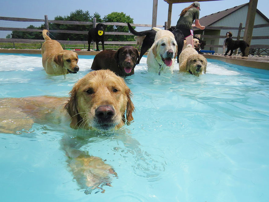dog-pool-party-lucky-puppy-17