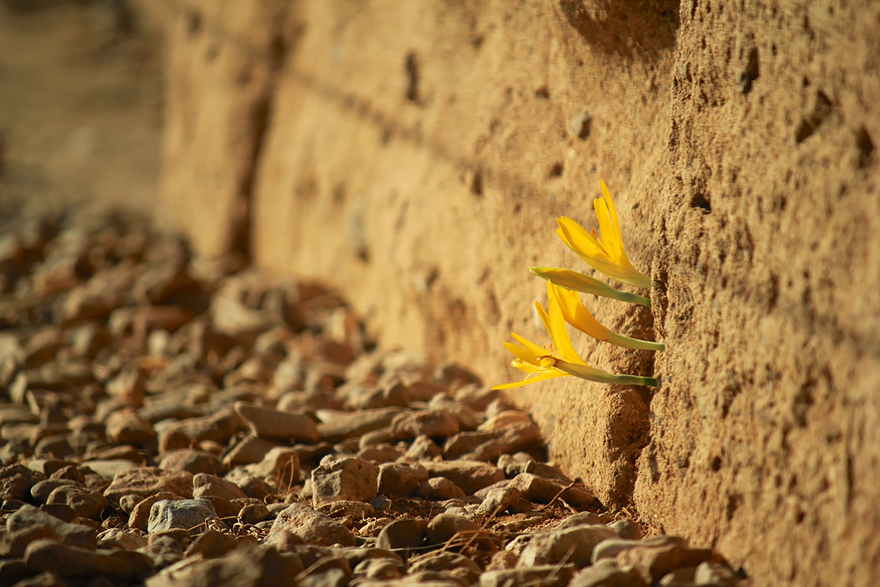 flower-tree-growing-concrete-pavement-107