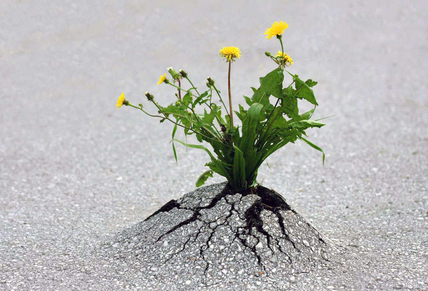 flower-tree-growing-concrete-pavement-19