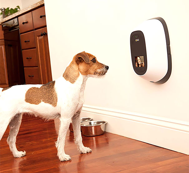 inventions-for-dog-lovers-13