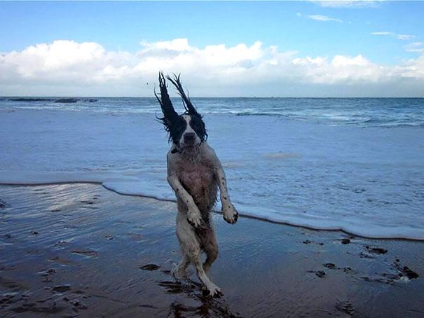 pefectly-timed-dog-photos-23