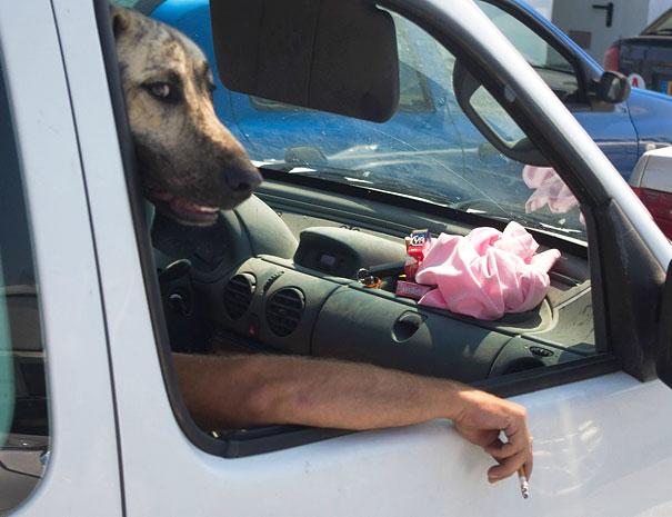 pefectly-timed-dog-photos-65