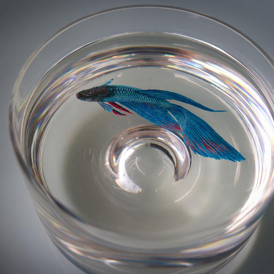 -animais realista-3d-mar-resina-Keng-lixívia-1