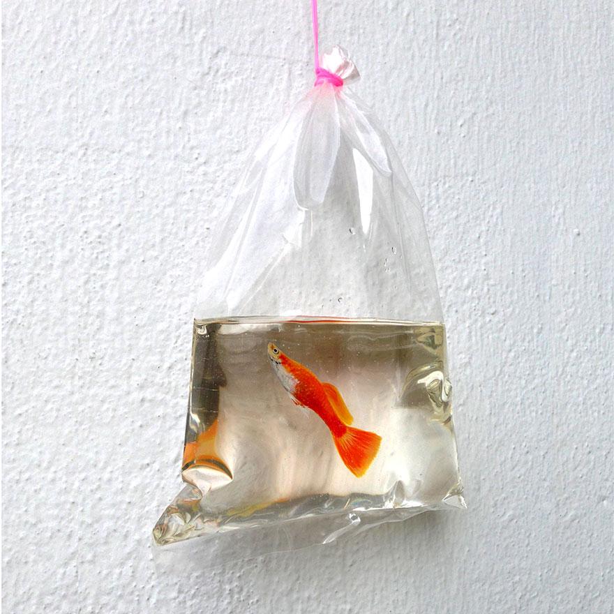 -animais realista-3d-mar-resina-Keng-lixívia-9