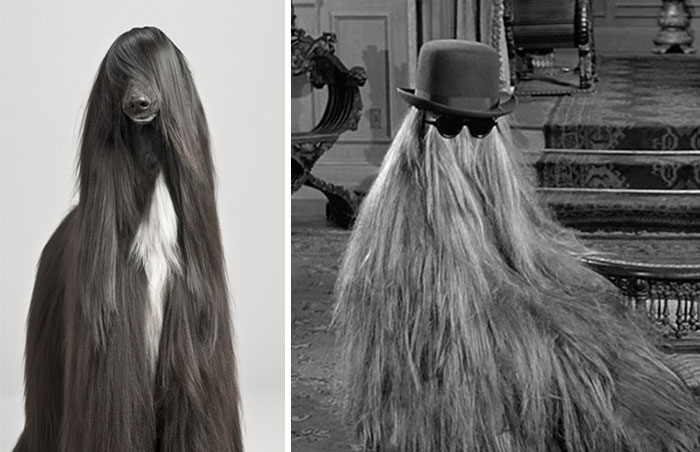 Dog That Looks Like Hair From