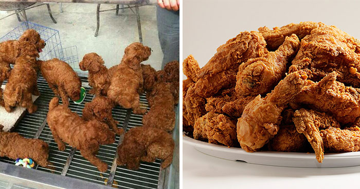 Puppies Look Like Fried Chicken