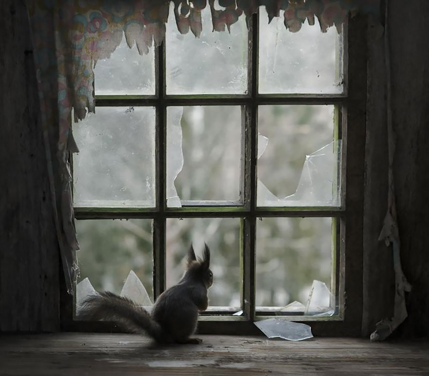 animals-looking-through-the-window-1
