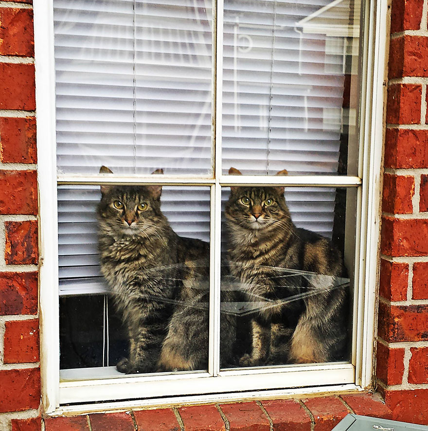 animals-looking-through-the-window-16