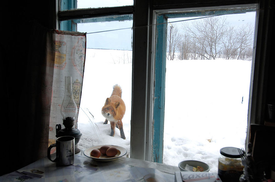animals-looking-through-the-window-17