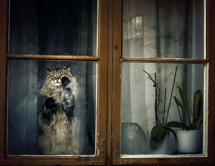 animals-looking-through-the-window-4