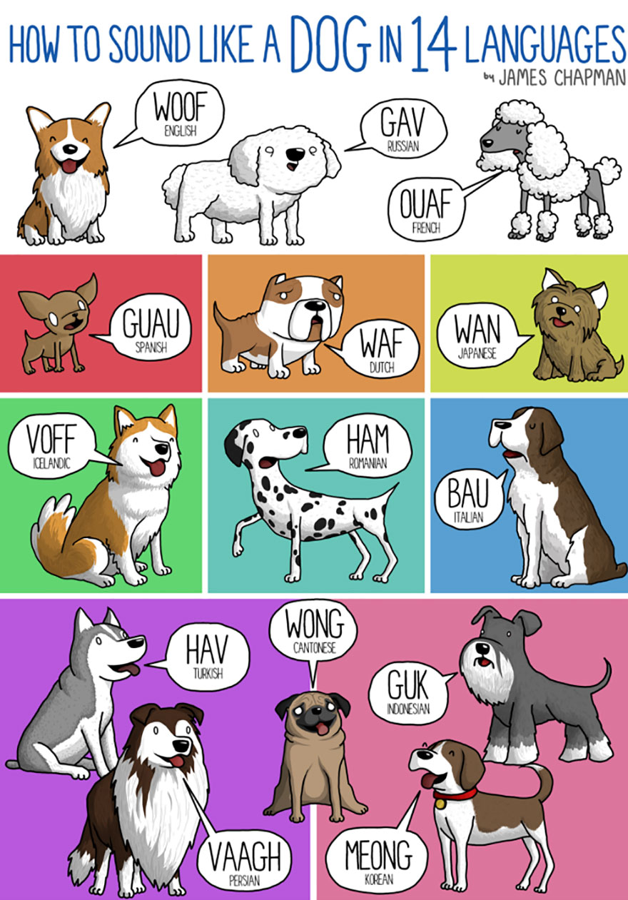different-languages-expressions-illustrations-james-chapman-24