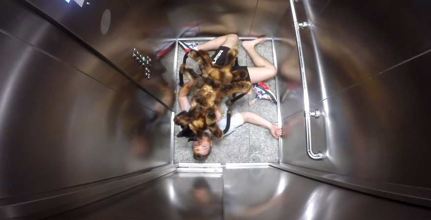 dog-spider-prank-sa-wardega-1