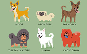 Dogs Of The World: Cute Poster Series Shows The Geographic Origins Of 200+ Dog Breeds