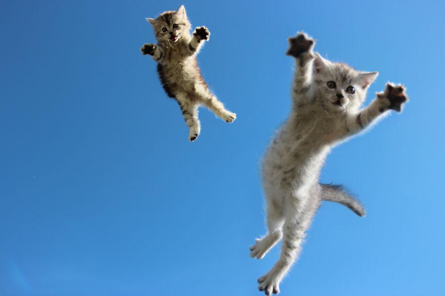 Jumping cats