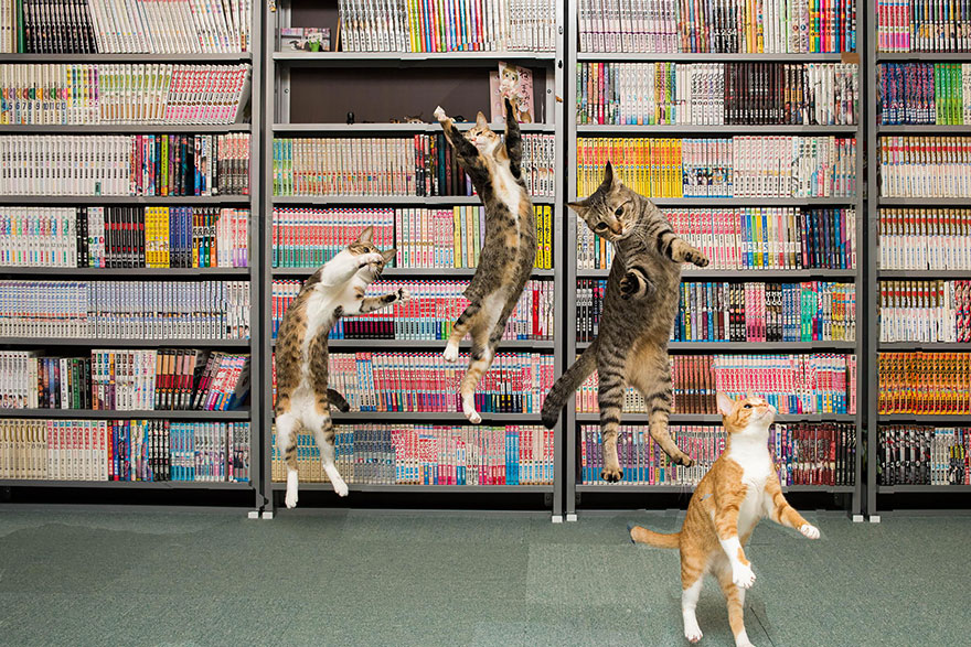 Jumping cats