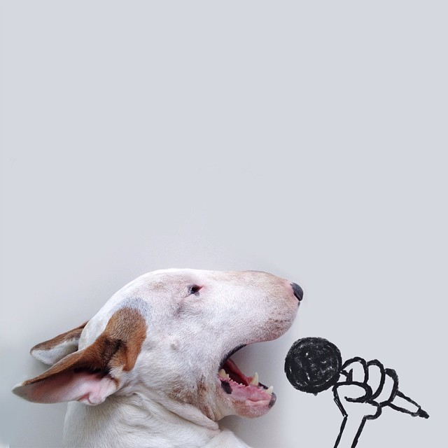 Jimmy-choo-bull-terrier-ábrákat-rafael-mantesso-1
