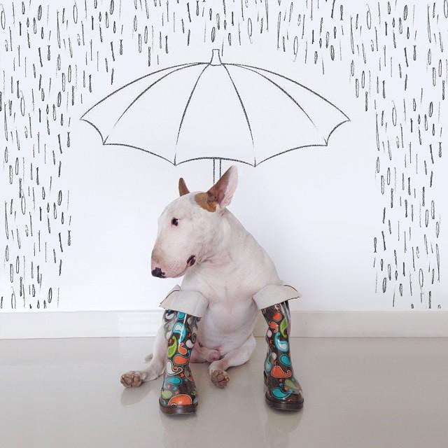 Jimmy-choo-bull-terrier-ábrákat-rafael-mantesso-10