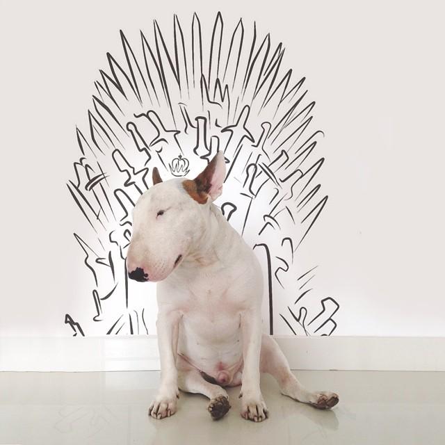 jimmy-choo-bull-terrier-ILUSTRAÇÕES-rafael Mantesso 11