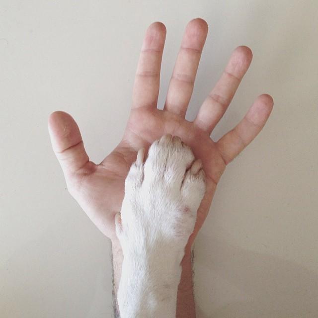 jimmy-choo-bull-terrier-ILUSTRAÇÕES-rafael Mantesso 14