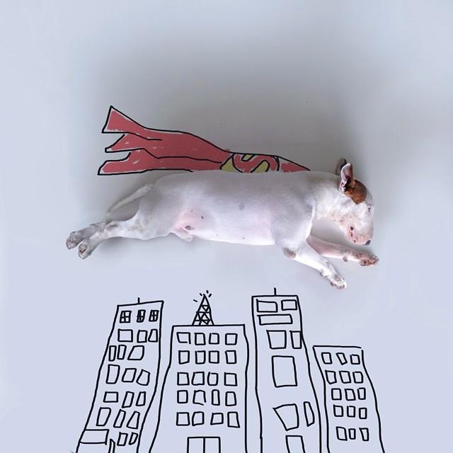 Jimmy-choo-bull-terrier-ábrákat-rafael-mantesso-2