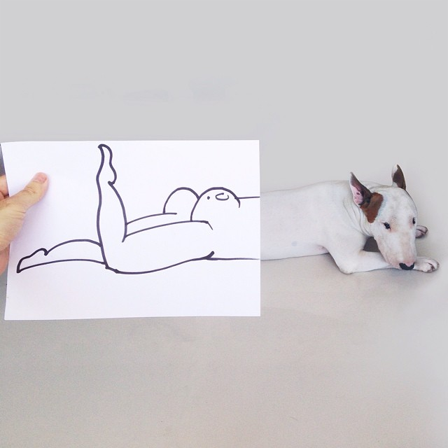 Jimmy-choo-bull-terrier-ábrákat-rafael-mantesso-3