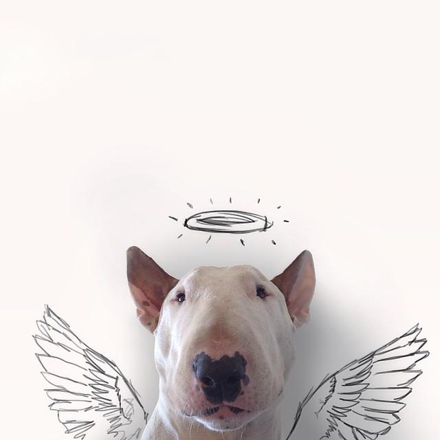 jimmy-choo-bull-terrier-ILUSTRAÇÕES-rafael Mantesso 7