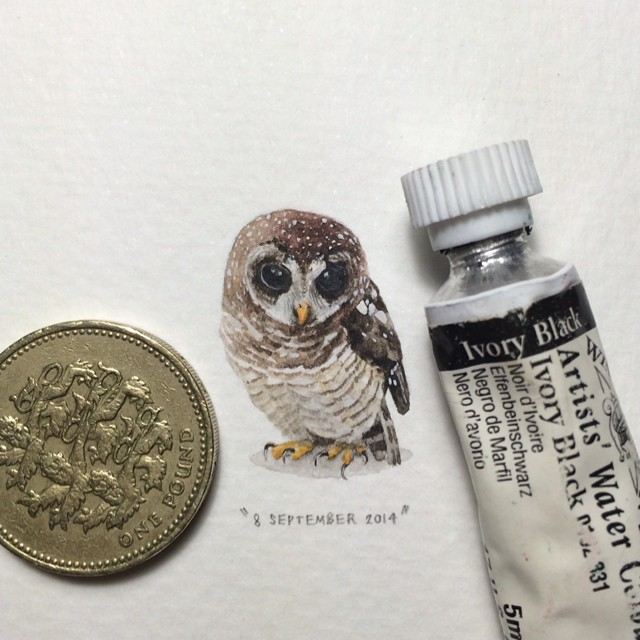 miniature-paintings-postcards-for-ants-lorraine-loots-2