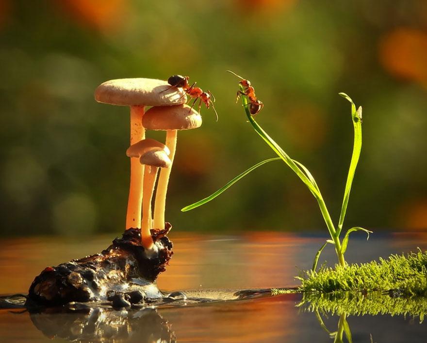 mushroom-photography-vyacheslav-mishchenko-10