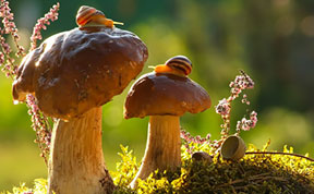 A Magical World Of Mushrooms By Vyacheslav Mishchenko