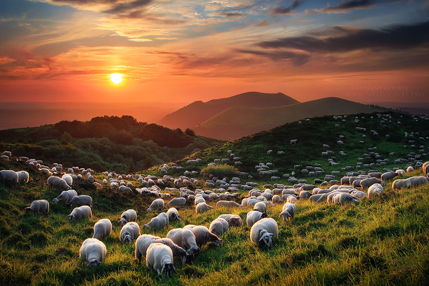rebaños de ovejas-around-the-world-13