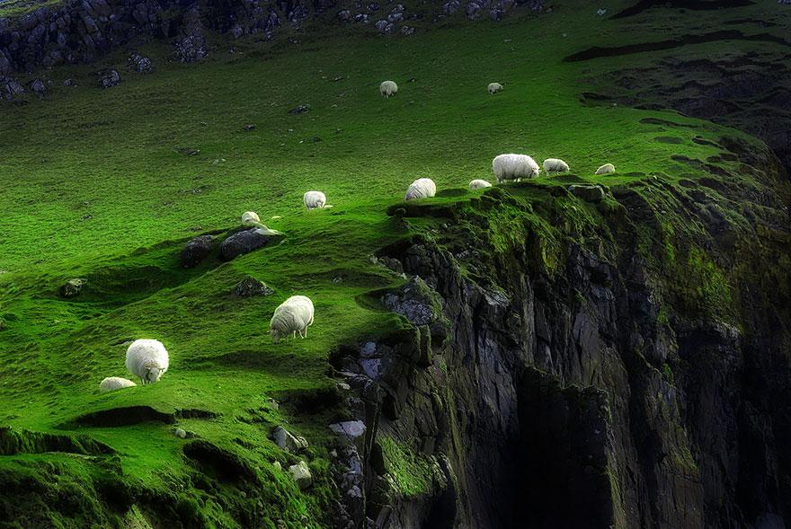 rebaños de ovejas-around-the-world-15