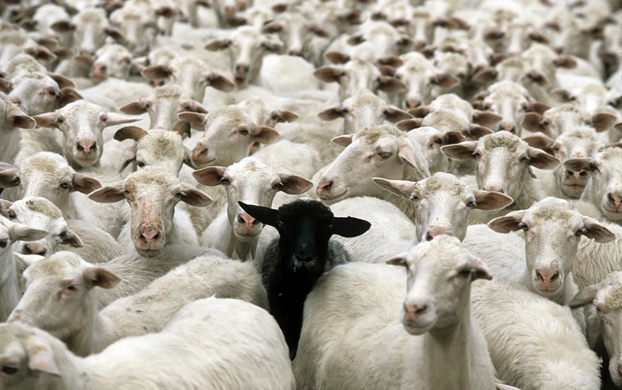 rebaños de ovejas-around-the-world-20