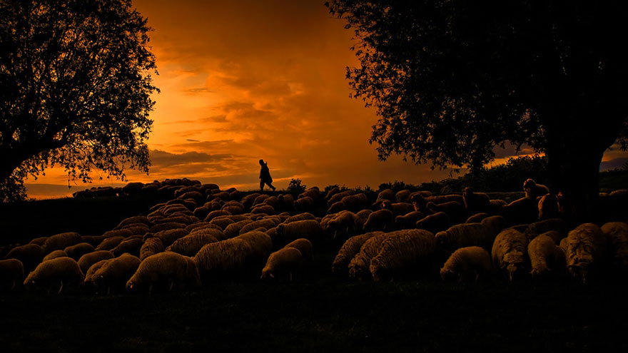 sheep-herds-around-the-world-22