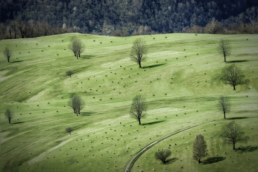 rebaños de ovejas-around-the-world-23