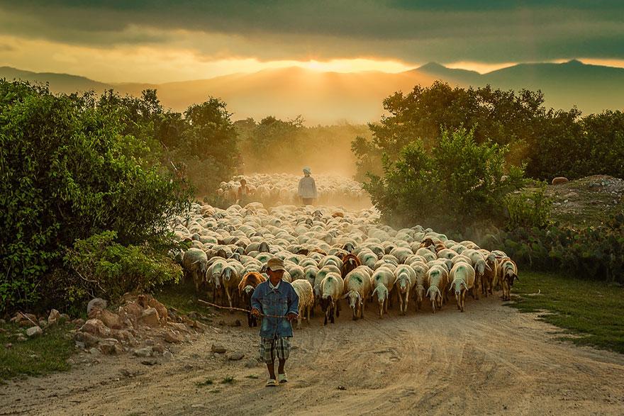 rebaños de ovejas-around-the-world-3