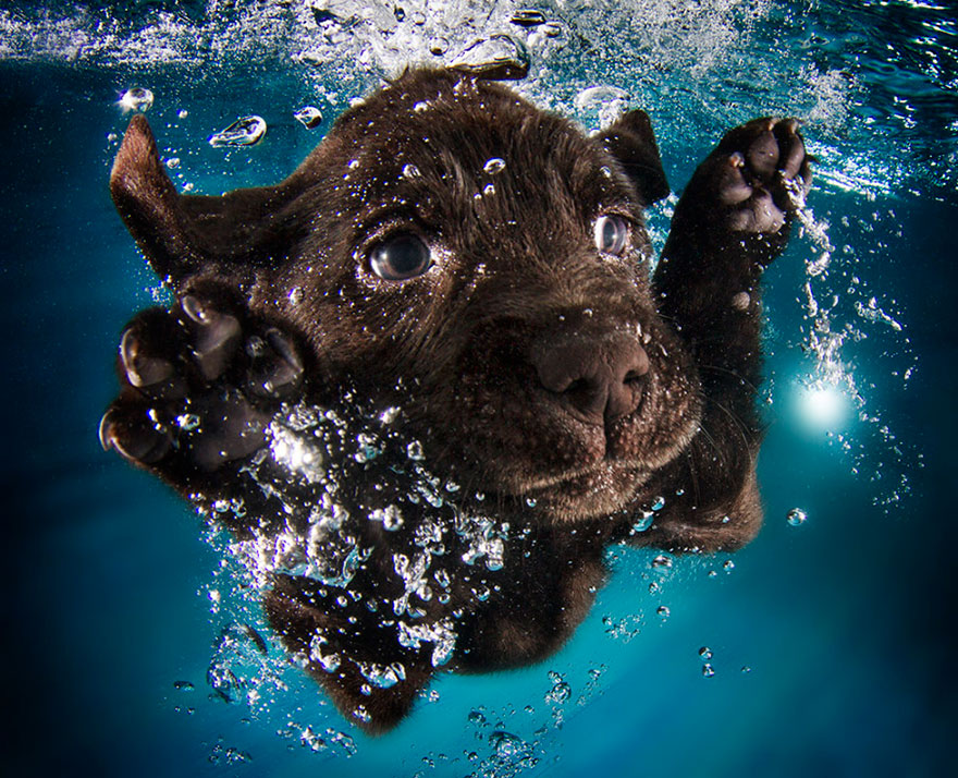 underwater-puppy-photography-seth-casteel-5
