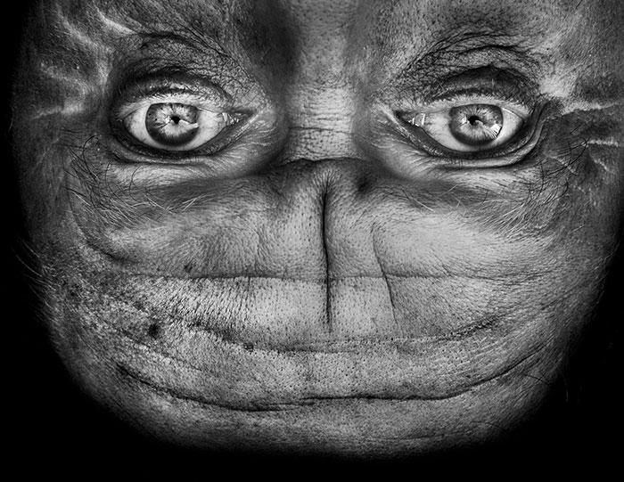 upside-down-portraits-alienation-anelia-loubser-5